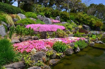 チューリップが見たかったのに…吉田公園 2013.04.22