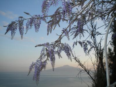 大好きイタリア 南イタリア8日間の旅2  ソレント、カプリ島