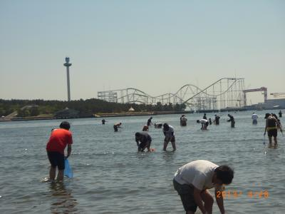 横浜あっちこっち第3弾 : 横浜で潮干狩り!