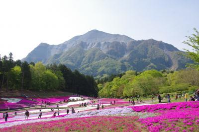 秩父の芝桜
