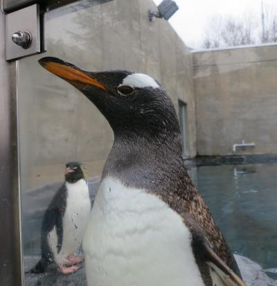 やっと『旭山動物園』へ ロワジールホテル旭川 宿泊