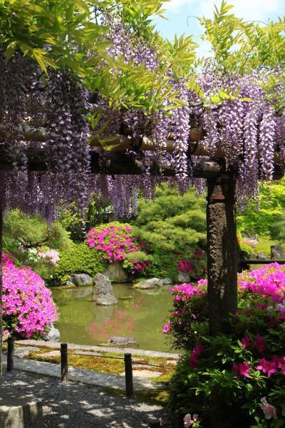 京都を歩く(160) 洛南花めぐり 城南宮の躑躅,鳥羽水環境保全センターの藤