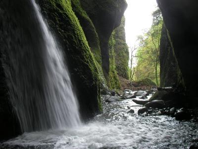 緑の洞窟に落ちる美瀑