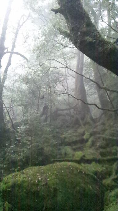 どこへ行っても麺が主食♪第11弾 鹿児島・熊本の旅《4日目~白谷雲水峡と飛魚ラーメン編》