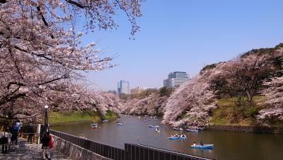 2013 3月22日 今年は開花が早くて大慌てのひとりお花見 千鳥ヶ淵の写真帳