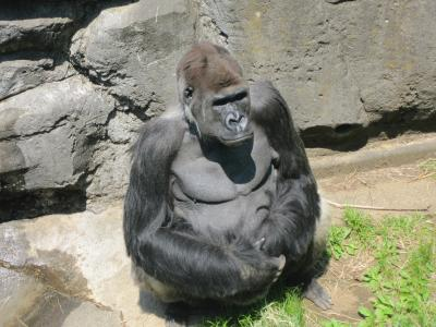 子供の日は動物園でしょう(*^_^*)