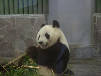 日本で唯一パンダとコアラ、レッサーパンダが同時に見れる動物園 【王子動物園】神戸市