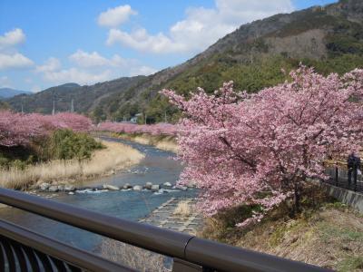 河津桜と近郊散策