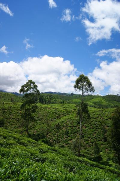 スリランカ中央1000メーロル級の紅茶畑を巡る (前編)