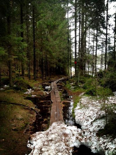 フィンランド一人旅 ヌークシオで冬の森を歩いたよ&ヴァップって何?!春の訪れを見たよ編