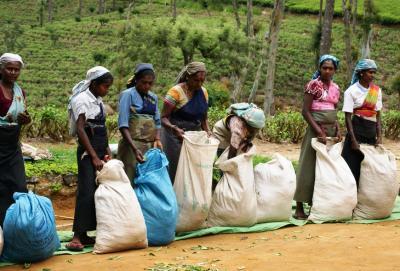 スリランカ中央1000メートル級の紅茶畑を巡る (後編)