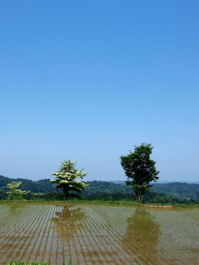 「 新緑散策 」 & 松之山温泉 ひなの宿 「 ちとせ 」 の旅 < 新潟県十日町市・魚沼市・長岡市 >