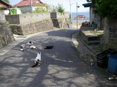 """仙台、石巻、そして""""猫の島""""田代島へ。。"""