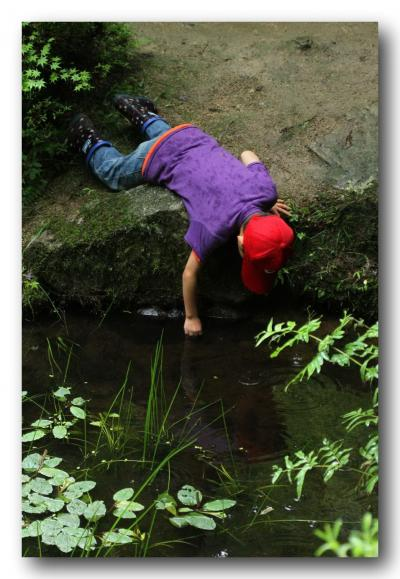 Solitary Journey [1212] 水辺の樹上に産卵する奇妙な習性をもつ'天然記念物モリアオガエル'<吉水園一般公開>広島県安芸太田町