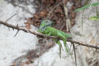 コスタリカ パロ・ベルデ国立公園