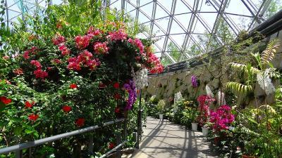 庭園紀行(28)・・・とっとり花回廊 展望回廊を一周 後編