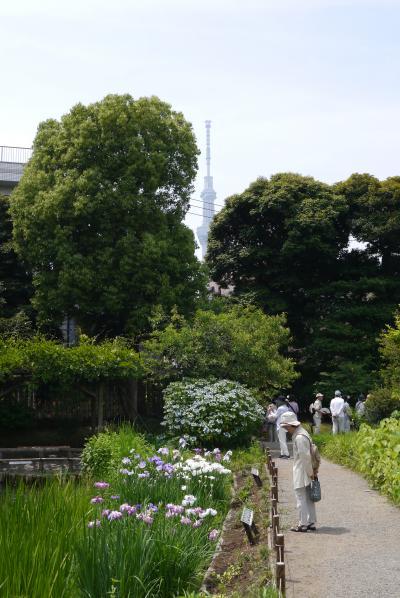 梅雨どきの花を愛でる・向島百花園
