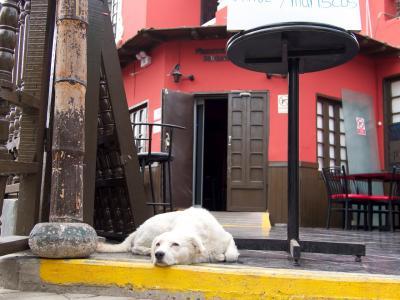 たくさんの幸せをくれたペルー12日間の旅 in 2013 その8 (リマ その2編)