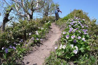 258-今年も満開のシラネアオイを求めて伊達紋別岳に登ってきました!