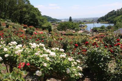 プチオフ会   薔薇の花園へ
