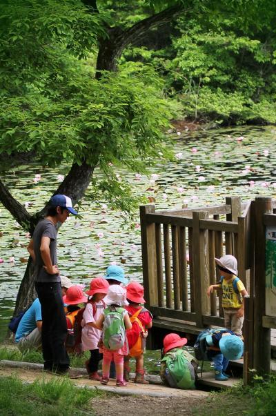 Solitary Journey [1215] 睡蓮鑑賞のあとに可愛い保育園児たちと鯉の餌やり<続・極楽寺山>&<観音寺の紫陽花>広島市佐伯区