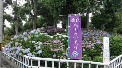 稲沢のあじさい寺(性海寺)のあじさいが7~8分咲きになって見頃です。