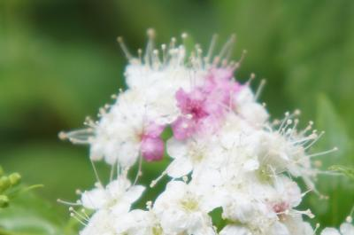 雨が降ったら 鎌倉紫陽花散歩