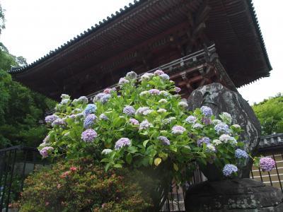 大阪・池田、関西花の寺第12番「久安寺」の紫陽花