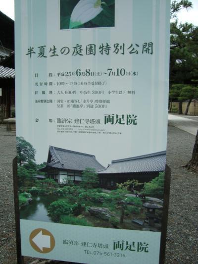 「~両足院~半夏生(はんげしょう)を見に、ぶらりぶらり京都」