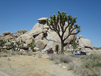 南カリフォルニアゆったり旅(2013年GW)。。。その10「JOSHUA TREE NATIONAL PARK」