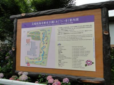 大塚山性海寺歴史公園のアジサイ