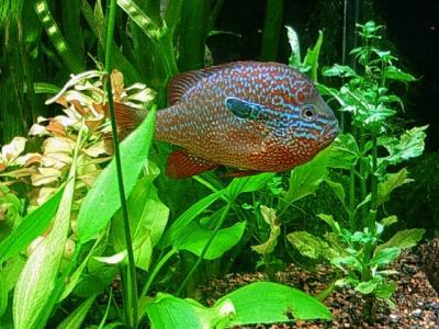チャタヌーガ演奏旅行(その3) テネシー水族館