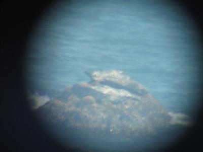 襟裳岬でゼニガタアザラシを見つけよう