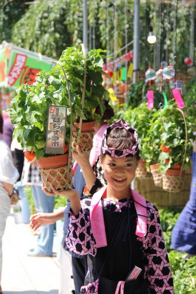今年も暑いゾ、浅草寺ほおずき市