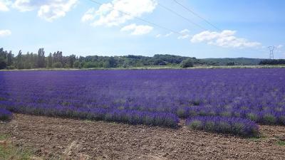 フランスの旅(30)・・・最も美しい村ラ・ガルド・アデマールの街歩き