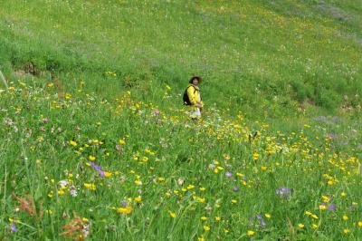 スイス花とハイキングの旅・ミューレン花の谷