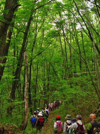 北杜Walk-1 長坂総合支所~オオムラサキの森 ☆自然観察歩道を往く