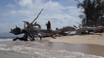 グリーン島に泊まってウミガメと泳ぐお正月!