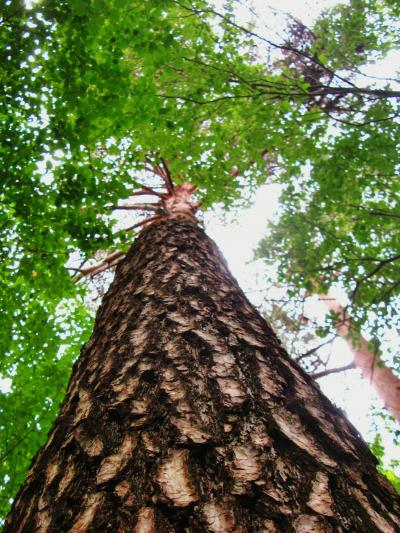 北杜Walk-2 オオムラサキの森~生態観察園 ☆八ヶ岳・南アルプスの姿は?