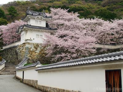 Journey to follow the cherry blossoms - 龍野編