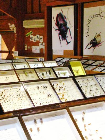 北杜Walk-4 森林科学館、見事な昆虫標本展示 ☆華麗な蝶々・巨大カブトムシも