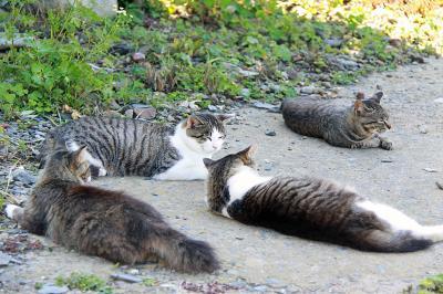 """猫の楽園""""田代島""""へ"""