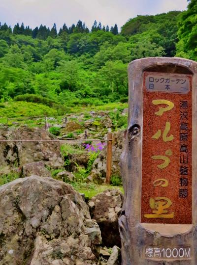 湯沢高原-3 アルプの里/初夏*ウスユキソウも開花 ☆1000mのロックガーデン