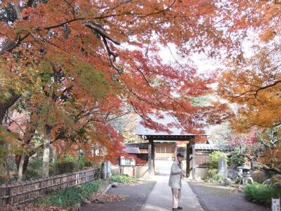 川口 興禅院の紅葉