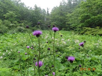 岡山県立 森林公園・・・しっとり 雨降る森を散策