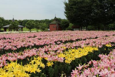 深谷 アクアパラダイス パティオの花壇にユリの花発見!