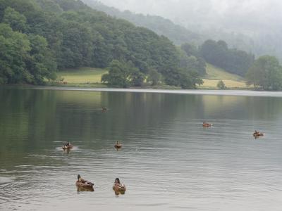 イギリス周遊8日間 2013年7月【湖水地方:ウィンダミア】