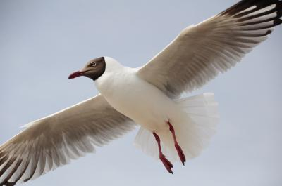GW西北旅19★青海湖★鳥インフル騒ぎの最中、鳥島へ!