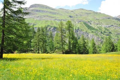 スイス花とハイキングの旅・リッフェルアルプツェルマット