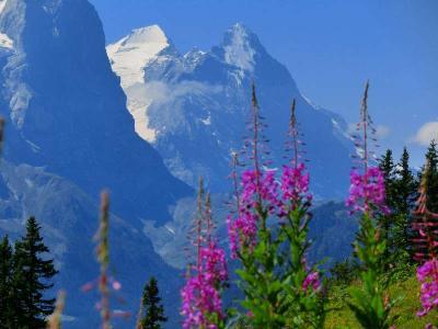 スイスハイキングに来ています51日目・アルペンタワー・メギスアルプ・ケーザーシュタット・ビドミ